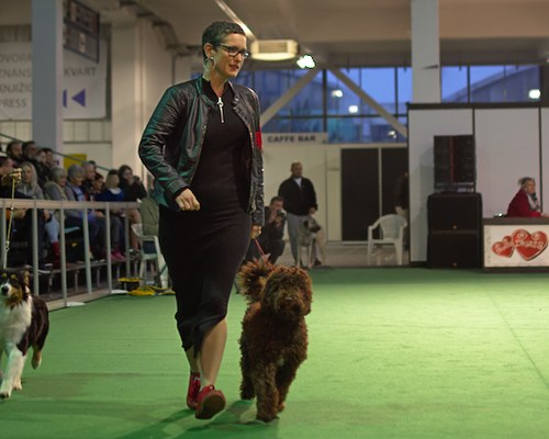 Faye auf der Winter Winner Dog Show in Zagreb